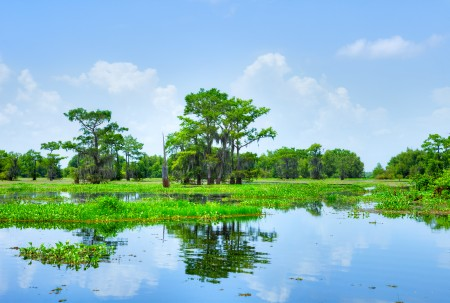 Cypress trees in the Atchafalaya Basin (pictured) will now receive better protection