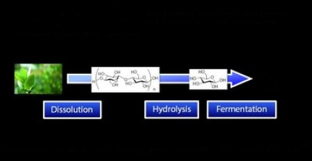 After dissolving plant biomass by the novel solvent, carboxylate-type liquid zwitterion, hydrolysis and fermentation were consecutively carried out in one reaction pot for conversion into ethanol. Image credit: Kanazawa University