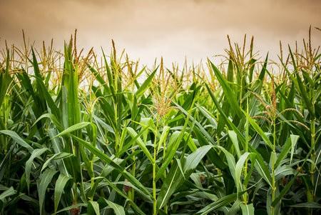 biofuels news item image