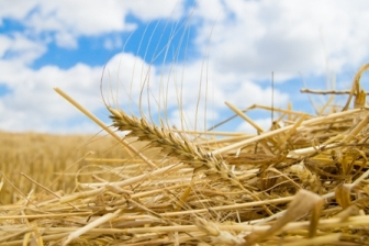 A golden future: biofuels are on the up in Europe