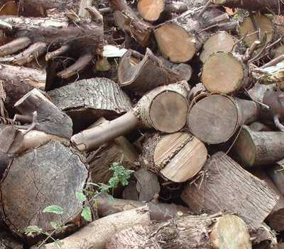 Logs and waste wood will be used to produce bioelectricity