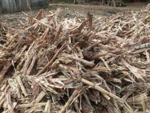 Bagasse has the potential to generate up to 40% of Cuba's energy needs