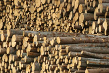 The UK's consumption of imported wood is expected to increase to 68%