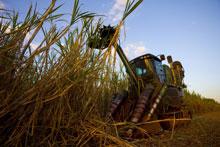 BP is expanding its activities in Brazil