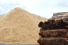 Biomass: an 'interesting' renewable investment opportunity