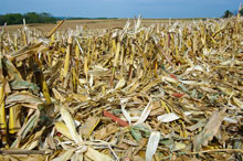 Agricultural residues like corn stover hold advantages over woodchips and pellets