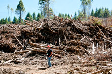 A forester demonstrates the size of slash piles, which researchers hope to turn into usable biomass for the bioenergy industry