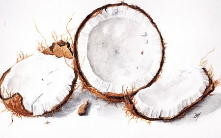 A new biomass plant has been specifically designed for the simultaneous combustion of all forms of coconut waste